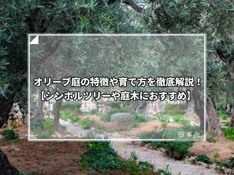 オリーブ庭
