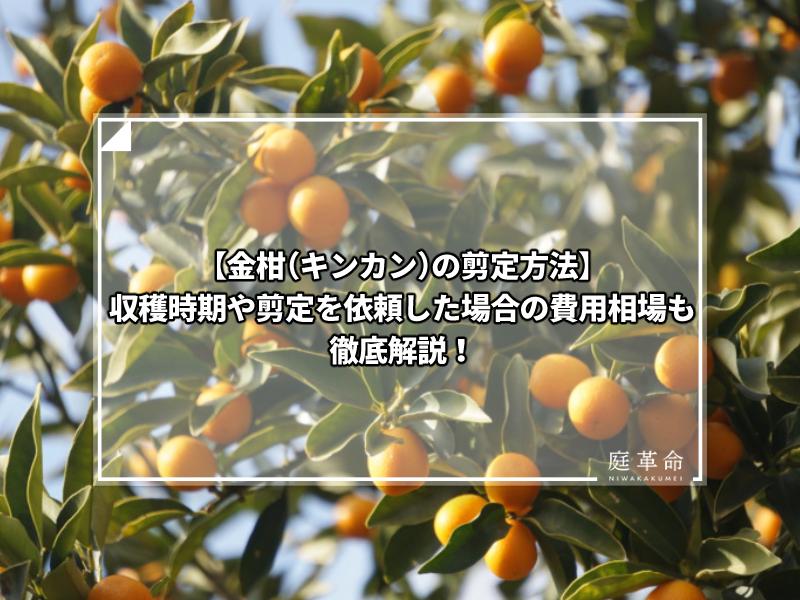 金柑(キンカン)
