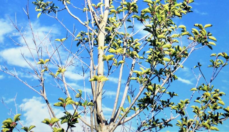 背の高い木の枝