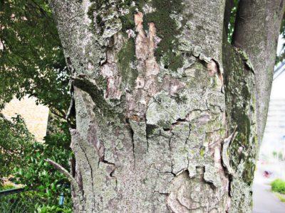 荒れた樹木