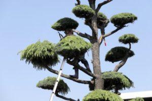 木に登る植木屋