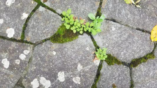 苔が生えている石