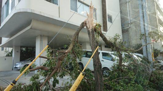 木が倒れている
