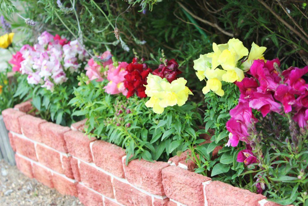 小さい花壇