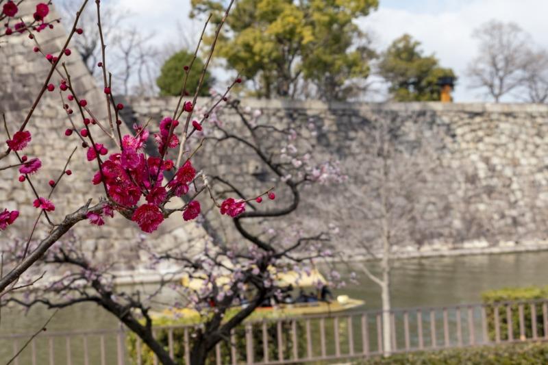大阪城西の丸庭園の梅