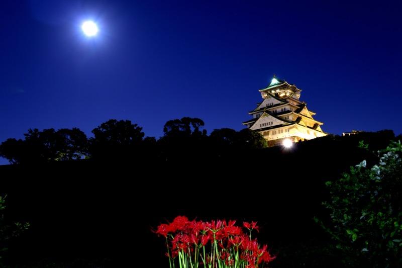 彼岸花と大阪城