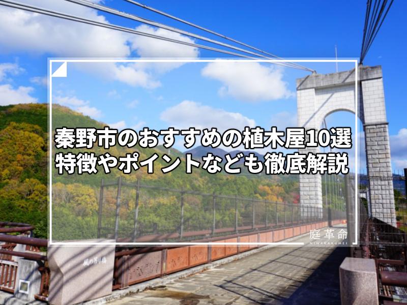 秦野戸川公園の風の吊り橋と色づいた丹沢の山