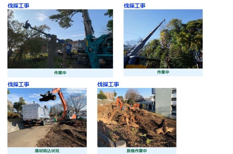 伐採・伐根工事