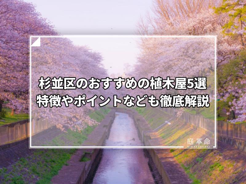 杉並区・善福寺川緑地公園の桜