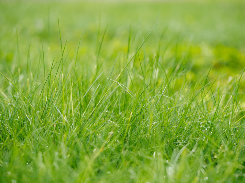 ガーデニング芝生