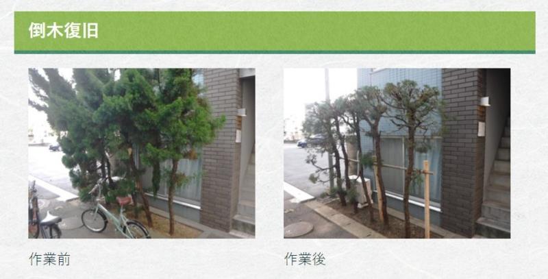 倒木復旧の施工事例