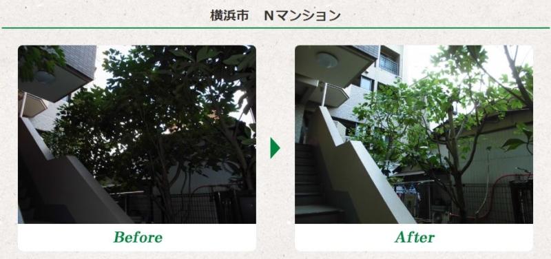 マンションの植木剪定