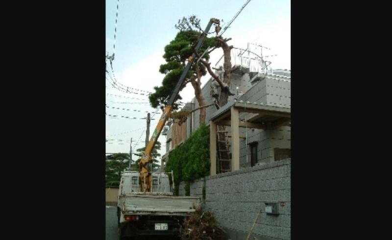 伐採の施工事例