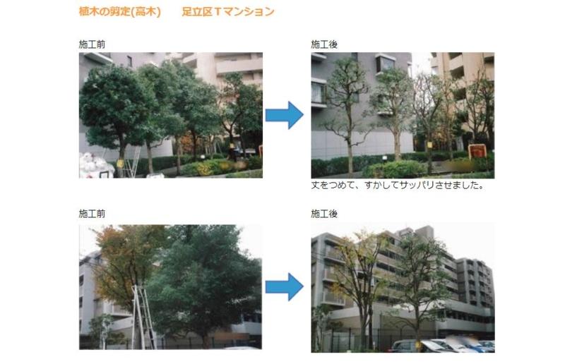 植木の剪定(高木)