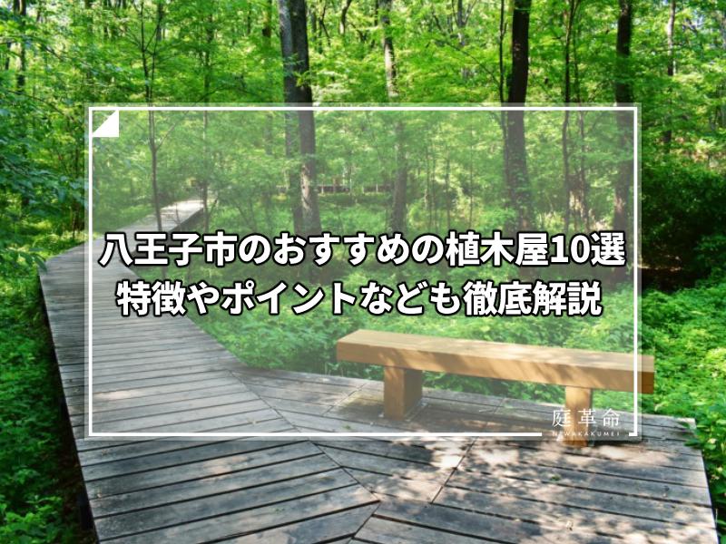 八王子市・小宮公園の森林遊歩道