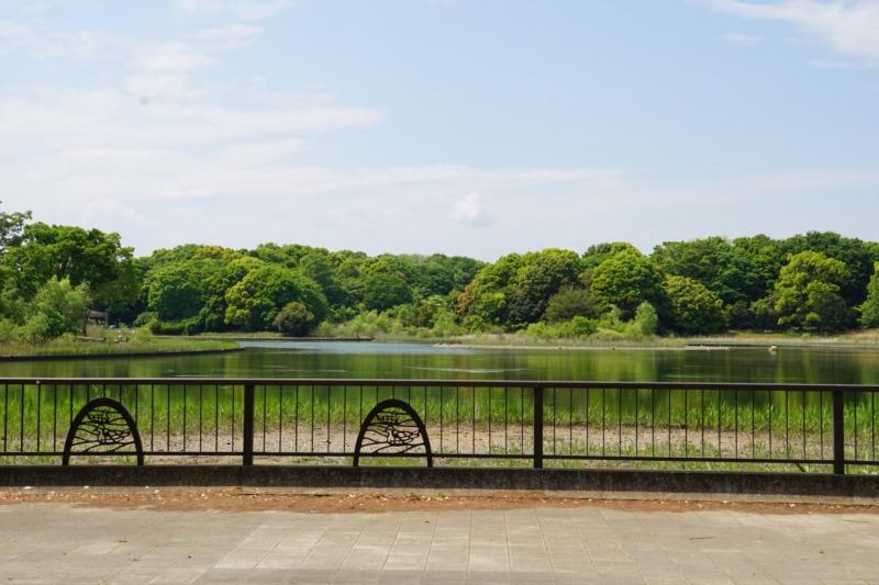 立川市 国営昭和記念公園 水鳥の池