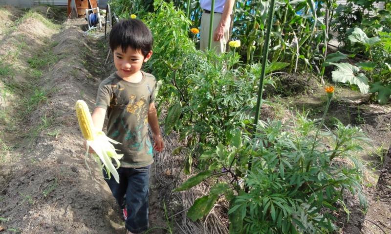 トウモロコシを持った男の子